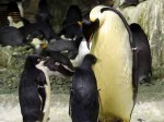 Cancer Treatments and Penguins have in common